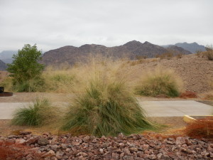 Alkalai sacatone grass is a beautiful component to any landscape, particularly in areas with extreme environmental conditions. Photo courtesy: Alice Newton