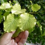 Fertilizer 0515