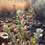 plant1a0116