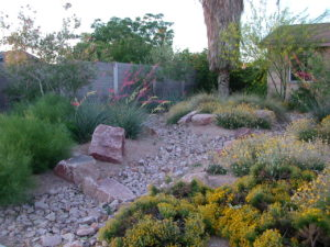 Carefully chosen trees, shrubs and accent plants make for beautiful, sustainable landscape designs in the arid Southwest. Photo courtesy: Helen M. Stone.